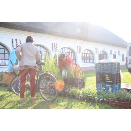 Kondorosi Virág - és Kézműves vásár