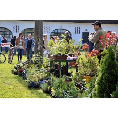 Tavaszi Virág- és Kézműves Vásár
