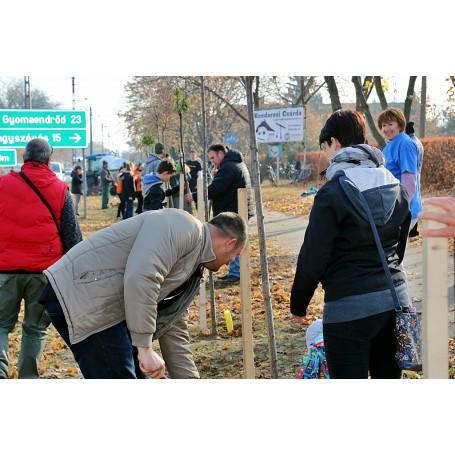 Mi Kondorosunk-Kezdetét vette az Ültess fát mozgalom városunkban